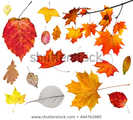 Culori frunze fundal Imagine de stoc © mariephoto