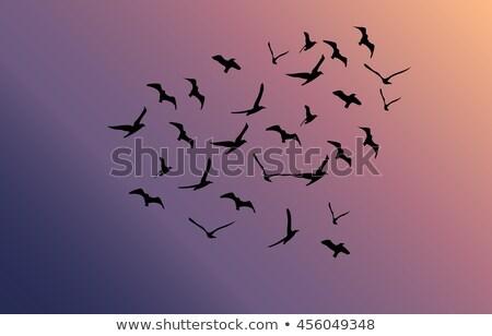 battant · oiseaux · lumineuses · soleil · vecteur - photo stock © freesoulproduction