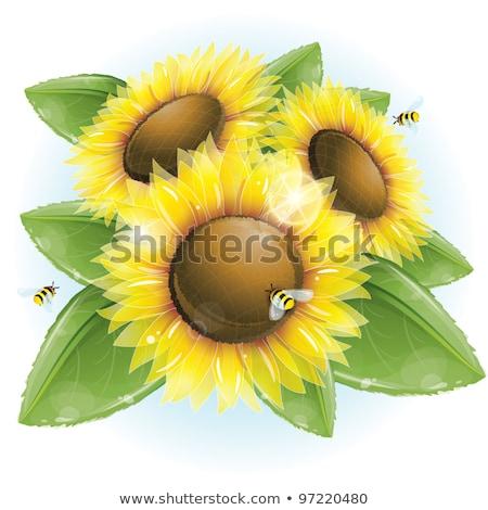 Sunflower petals with summer sun. EPS 10 Stock photo © beholdereye