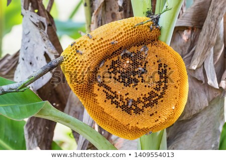 pszczół · ul · drzewo · Indie · Pszczoła - zdjęcia stock © bdspn
