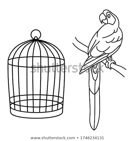 parrot in a cage stock photo © manaemedia
