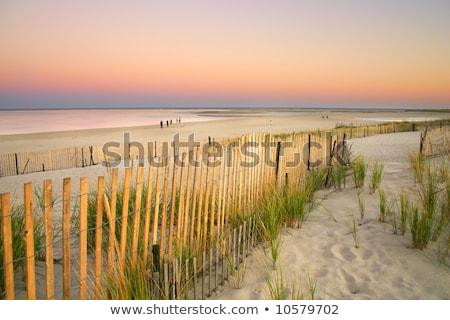 sunset on the beach cape cod usa stock photo © capturelight