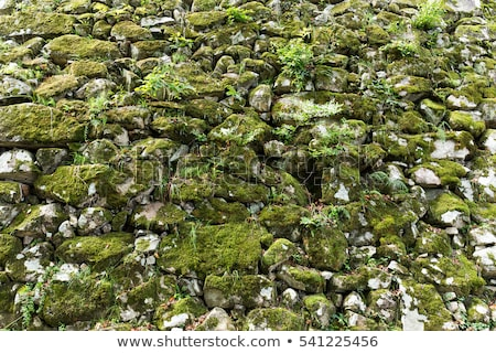 overgrown wall detail Stock photo © prill