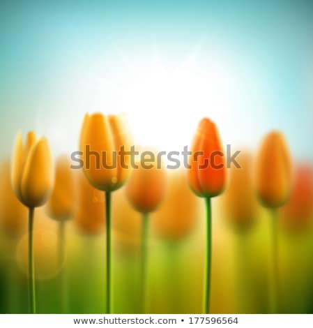 March 8 and yellow tulips. EPS 10 Stock photo © beholdereye
