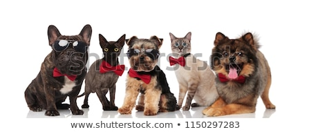 five cute cats and dogs wearing bowties and sunglasses Stock photo © feedough