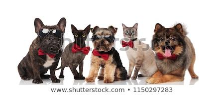 группа · пять · собаки · белый · пару · фон - Сток-фото © feedough