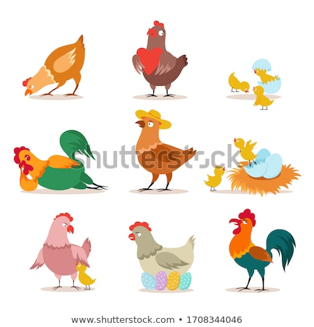 Animated brightly colored cock isolated on a white background. Beautiful rooster. Vector cartoon clo Stock photo © Lady-Luck
