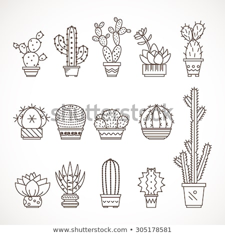 linear style icon of a potted fcactus  Stock photo © Olena