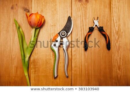 conjunto · planta · cuidar · utensílios · prato · negócio - foto stock © ruslanshramko