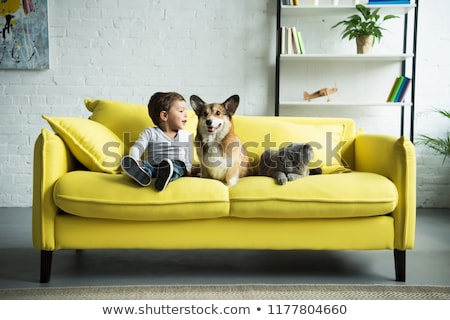 adorable little boy with cute cat on sofa stock photo © lopolo