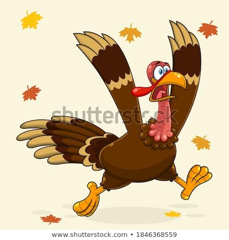 Assustado desenho animado Turquia peregrino ilustração olhando Foto stock © cthoman