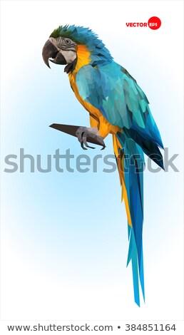Papagaios gaiola ilustração jardim fundo Foto stock © colematt