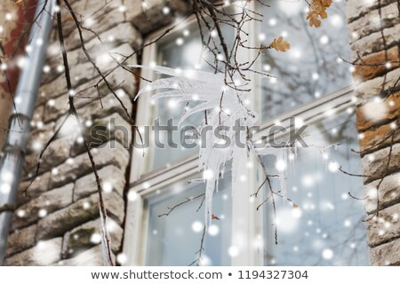 icicles on tree branch over window Stock photo © dolgachov