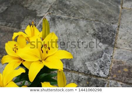 Jasne żółty lilia kwiaty kamień patio Zdjęcia stock © sarahdoow