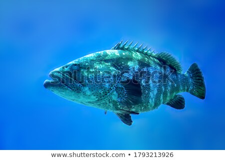 Spotted fish in the shallows Stock photo © lovleah