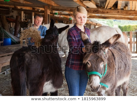 Stock photo: A woman in rural scene on the donkey farm