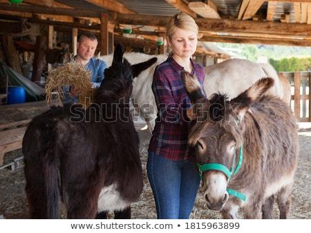 Kobieta wiejskie sceny osioł gospodarstwa niebo piękna Zdjęcia stock © ElenaBatkova