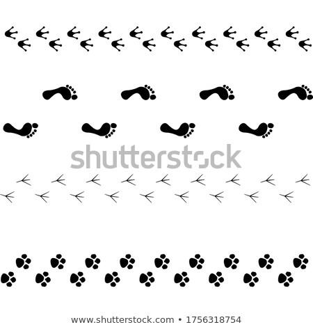 Animal and bird trace steps black imprints, seamless pattern on white Stock photo © evgeny89