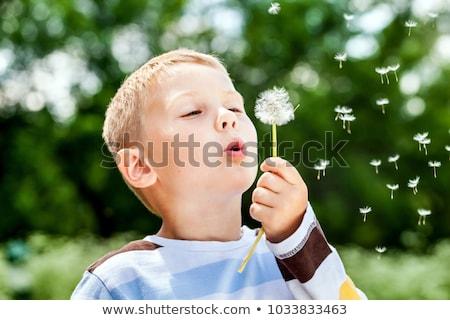 kicsi · fiú · legelő · pitypang · égbolt · fű - stock fotó © fotorobs