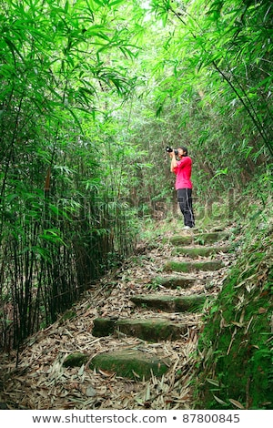 Photographer Taking Photo In Bamboo Path Stok fotoğraf © cozyta