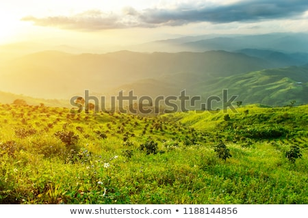 fresh sunrise at mountain Stock photo © dotshock