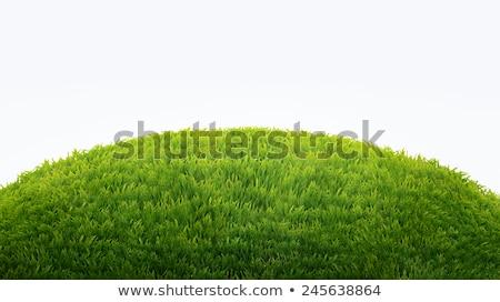 Füves dombok kettő izolált fehér fű Stock fotó © Suljo