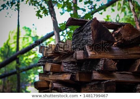 Bois de chauffage extérieur forêt nature Photo stock © zhekos