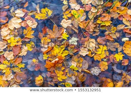 осень · лужа · сцена · пейзаж · грязи - Сток-фото © eldadcarin