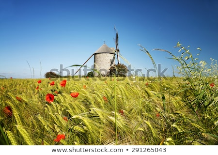 Windmill in Normandy Stock photo © smuki