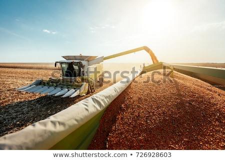 combine for harvesting corn Stock photo © OleksandrO