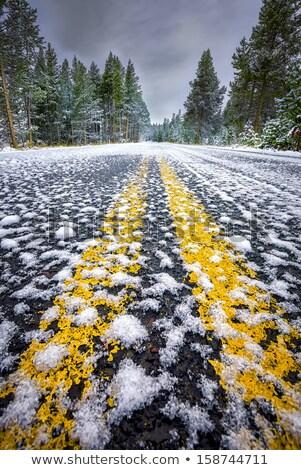 Wcześnie zimą krajobraz lasu Zdjęcia stock © emattil