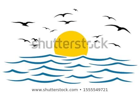 sunset and seaguls stock photo © vapi