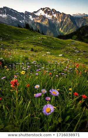 yaz · manzara · çayır · pembe · çiçekler · dağlar - stok fotoğraf © kotenko