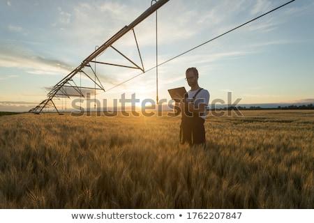Irrigation system on the wheat field at summer sunset Stock photo © meinzahn