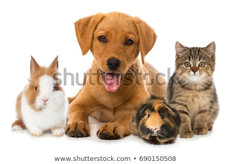 Domestic animals Stock photo © bluering