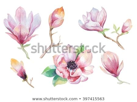 Magnolia bloesem schilderij japans boom bloesems Stockfoto © StephanieFrey