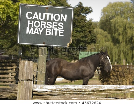 Beware horse bites sign Stock photo © njnightsky