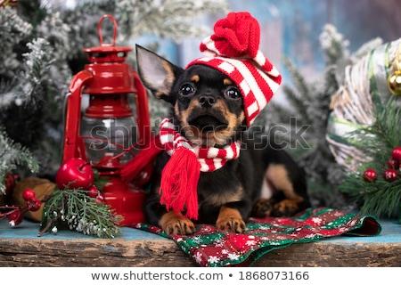 父 · 犬 · 子犬 · 家族 · 英語 · ブルドッグ - ストックフォト © cynoclub