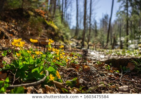 Wooden path in a Bavarian forest Stock photo © IS2