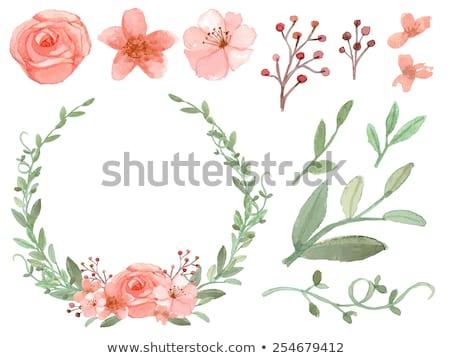 pastel · rosa · papoula · primavera · quente · dia - foto stock © lubavnel
