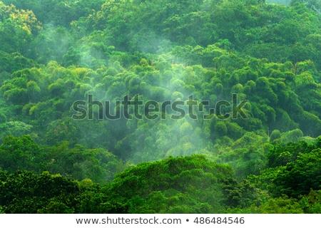 тропические · лес · пейзаж · зеленый · деревья · листьев - Сток-фото © bluering