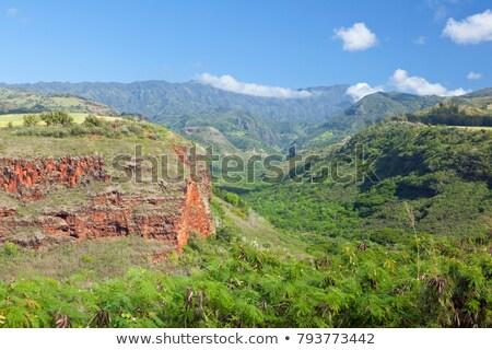 völgy · kilátás · Hawaii · USA · fa · erdő - stock fotó © dirkr