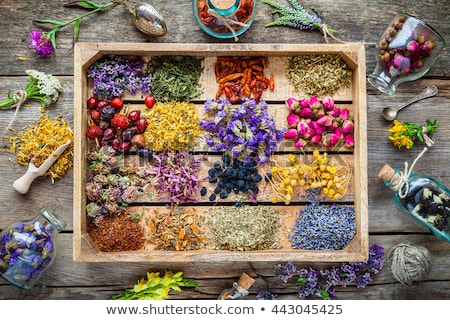 Stock photo: Dry Herbs and flowers, herbal medicine. Flat lay.