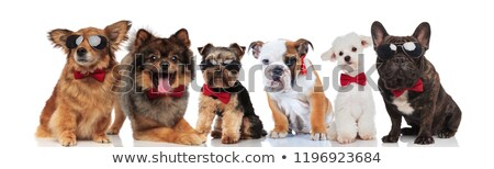 group of six adorable dogs of different breeds wearing bowties Stock photo © feedough