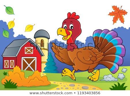 lopen · Turkije · vogel · afbeelding · blad · boerderij - stockfoto © clairev