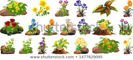 Daffodil flowers and log Stock photo © colematt