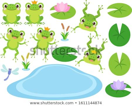Könyv zöld béka tavacska illusztráció fa Stock fotó © colematt