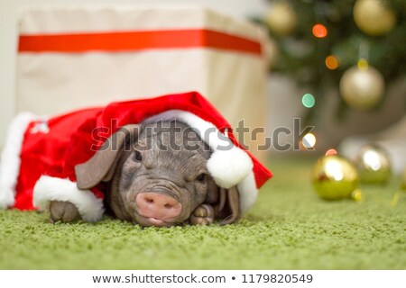 piglet symbol of new year with gift box winter stock photo © robuart