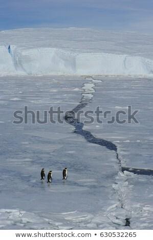 gyönyörű · jéghegy · körül · tenger · óceán · jég - stock fotó © maridav