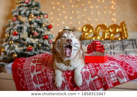 Alasca cão cama feliz manhã casa Foto stock © furmanphoto